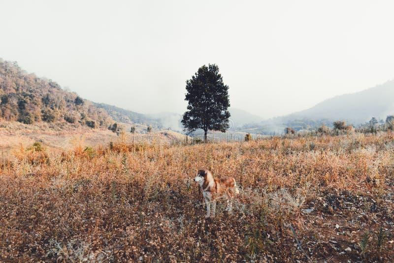 狗室外领域和路和我的狗旅行 免版税库存照片