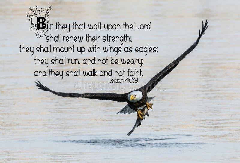 白头鹰圣经诗歌 库存照片
