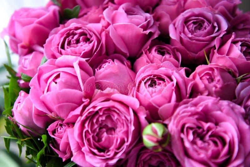 紫红色的明亮的玫瑰 在柔光的精美桃红色花束 免版税图库摄影