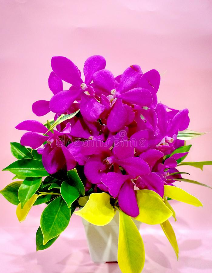 紫色紫罗兰色花 库存图片