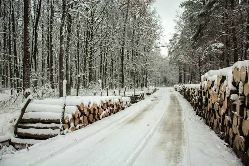 由方式通过神秘的森林-冬日的日志木头 图库摄影