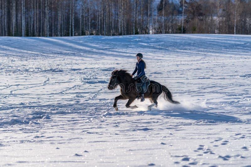 疾驰与她的在深雪的冰岛马的年轻瑞典妇女 免版税库存照片