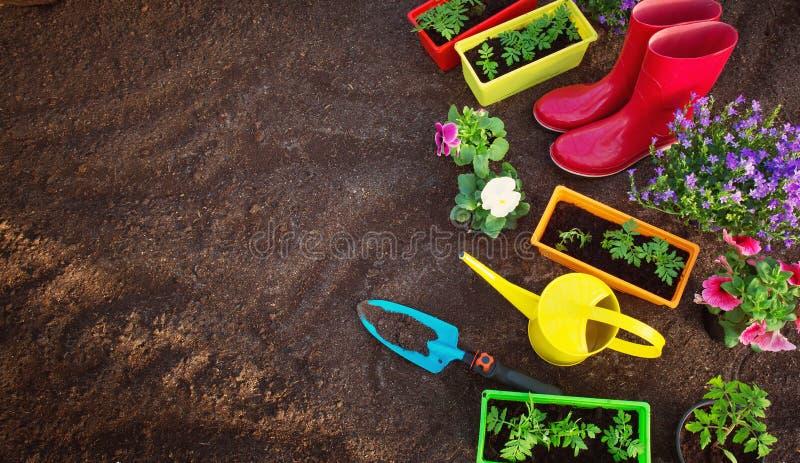 生长在庭院里的花和菜幼木 免版税库存图片