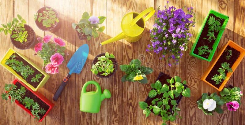 生长在庭院里的花和菜幼木 库存图片