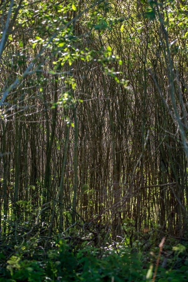 生长在森林的草丛和野生植物 库存图片