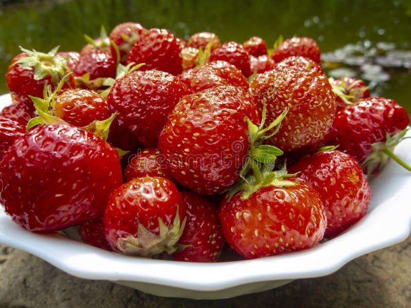 甜水多的草莓特写镜头在庭院池塘的白色圆的绿叶的 晴朗的夏日在庭院里 库存图片