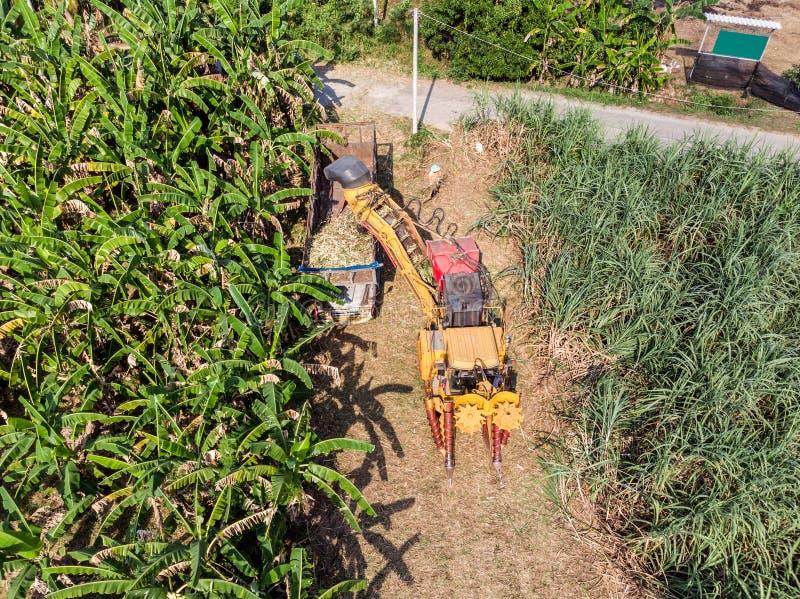 甘蔗收割机收获甘蔗入卡车 图库摄影