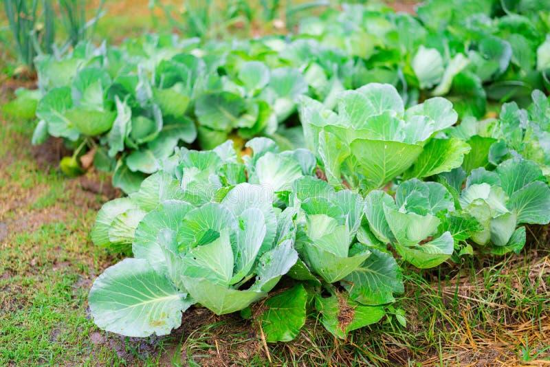 菜园晚夏 草本、花和菜在后院规则式园林里 Eco友好从事园艺 免版税图库摄影