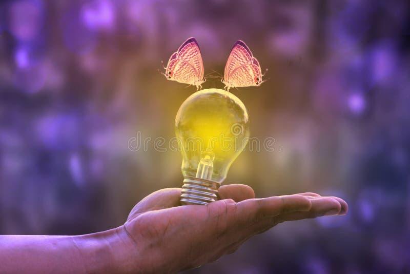 蝴蝶夫妇blub轻的美好的颜色 免版税库存图片