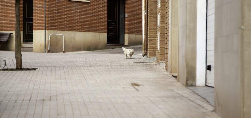 被放弃的狗街道 免版税库存照片
