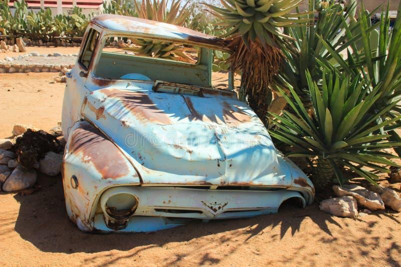 被放弃的老生锈的汽车在纳米比亚的沙漠由仙人掌围拢了在纳米布-诺克卢福国家公园附近 库存图片