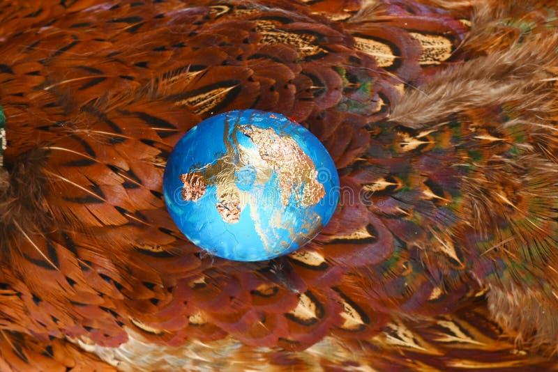 被洗染的蓝色用在野鸡羽毛背景的金鸡蛋 Boho窗框 复活节的装饰的鸡蛋 免版税库存图片