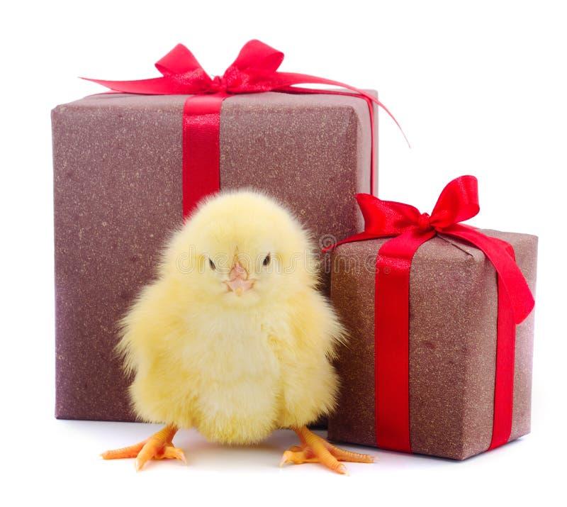 被隔绝的小的鸡 免版税库存照片