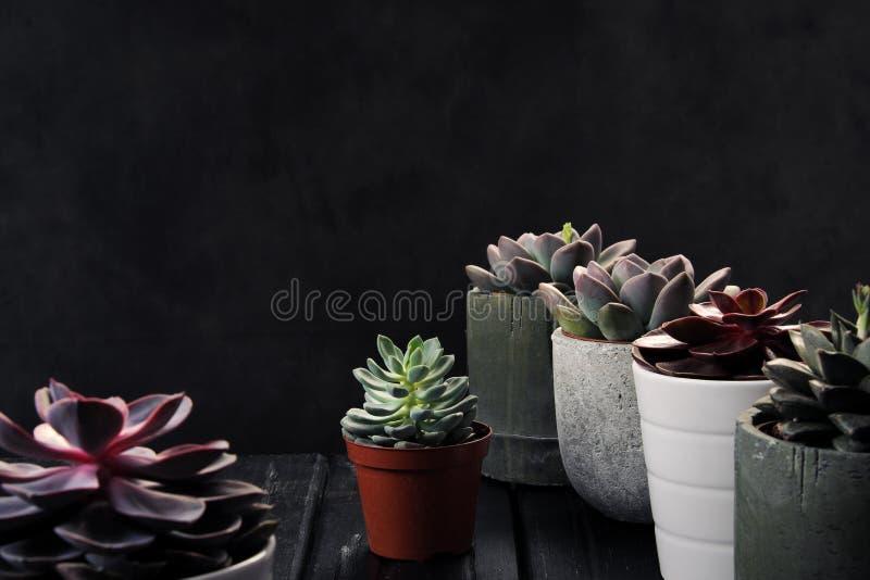 许多罐,白色陶瓷,灰色和具体与植物多汁植物红色淡紫色和绿色 站立连续,形式 图库摄影