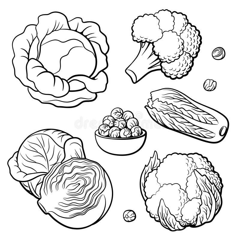 设置蔬菜 圆白菜、硬花甘蓝、花椰菜、大白菜和抱子甘蓝 库存例证