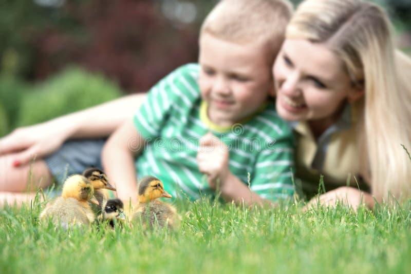 说谎在草和看起来小的鸭子步行的母亲和儿子 免版税库存照片