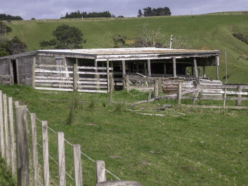 象草的农田的老木存贮棚子 免版税库存图片