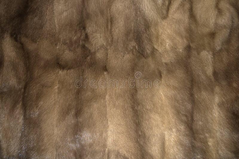 貂皮毛皮背景纹理 免版税库存照片