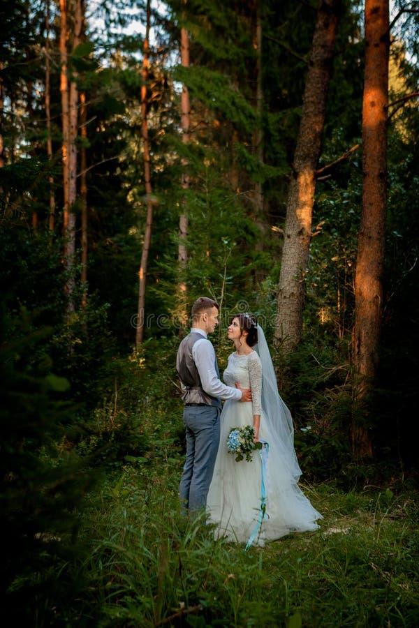 走在森林的美好的新婚佳偶夫妇 蜜月旅行者 新娘和新郎藏品手在杉木森林,华伦泰的照片里 图库摄影