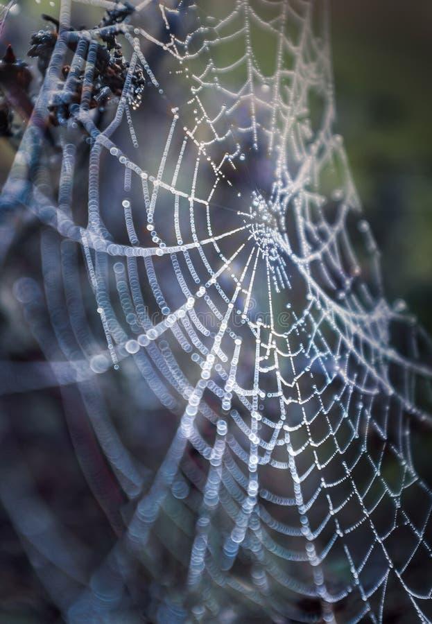 蜘蛛网清早在一冷颤,但是明亮的晚冬天 潮湿露滴在网能看 库存图片