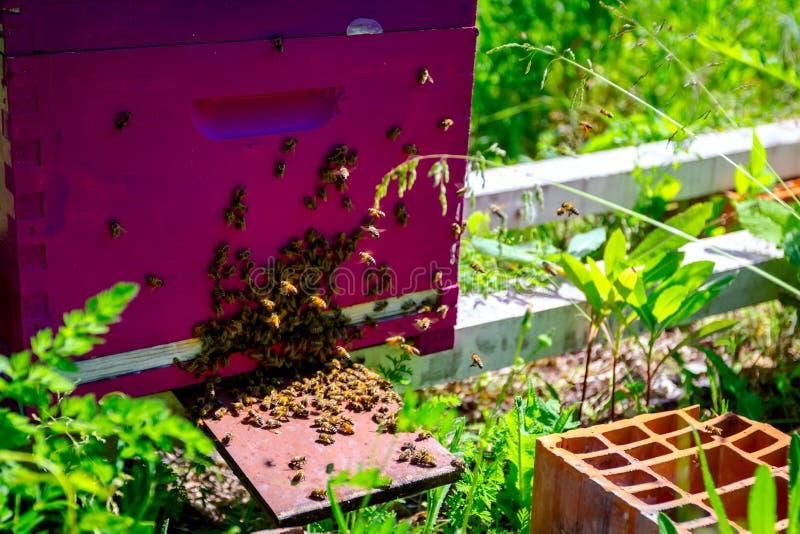 蜂来自蜂房,群集 免版税图库摄影