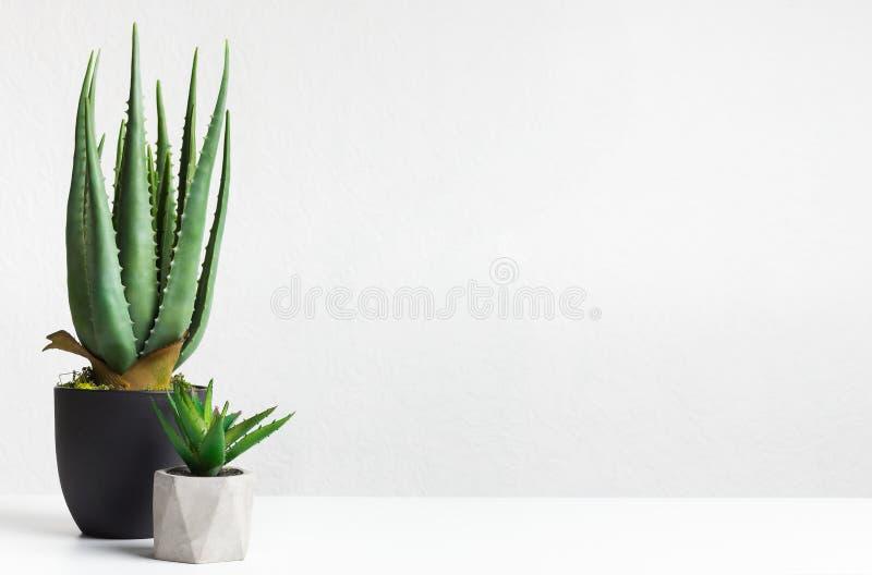 芦荟维拉和罐的微型多汁植物在轻的墙壁 库存照片