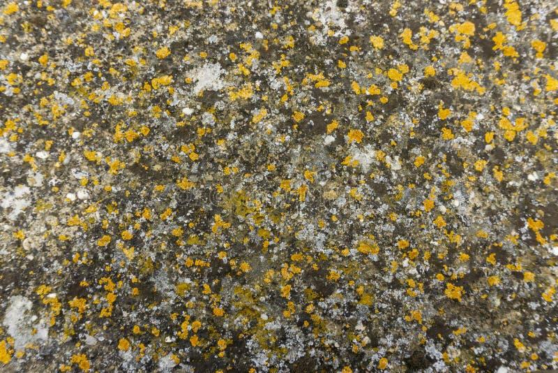 花岗岩石头表面上的五颜六色的地衣覆盖物  免版税库存图片