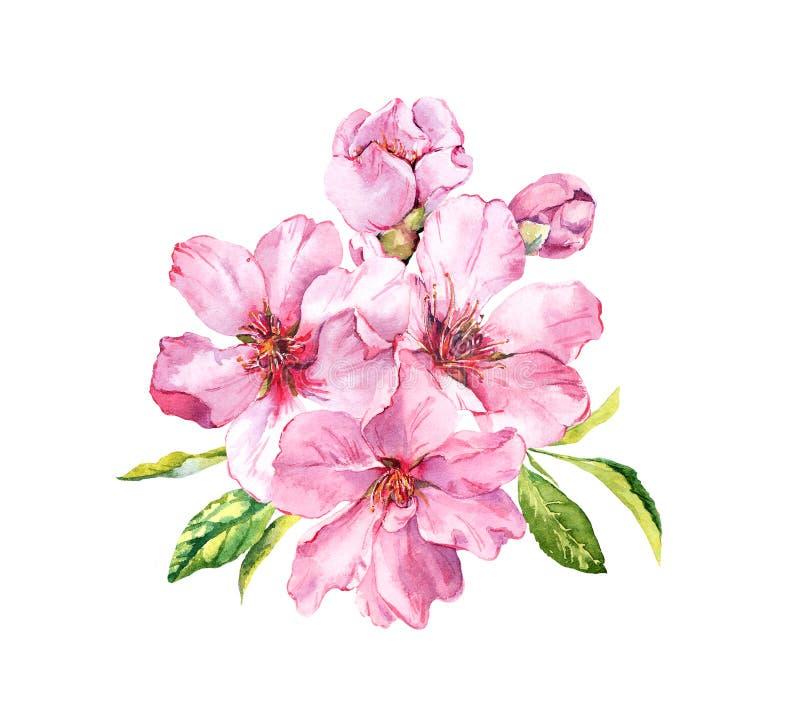 花桃红色春天 樱花,杏仁,苹果,佐仓 水彩 库存例证