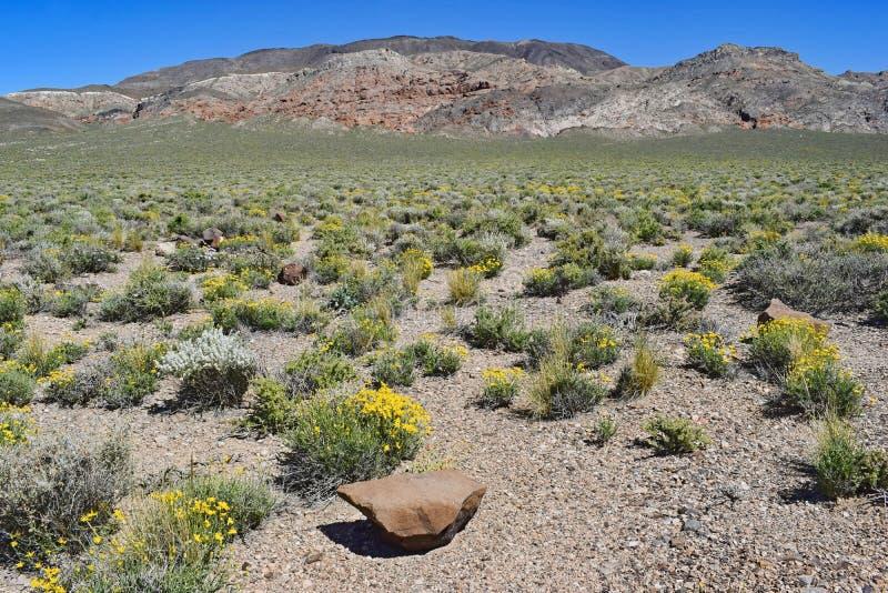 莫哈韦沙漠加利福尼亚春天、开花的花和植被 库存图片