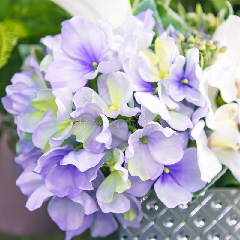 背景细部图花卉向量 庭院和室内装饰的家庭设计装饰、细节和元素 人为园林植物花 图库摄影