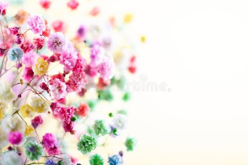 背景花卉春天夏天 开花的五颜六色的小花 图库摄影