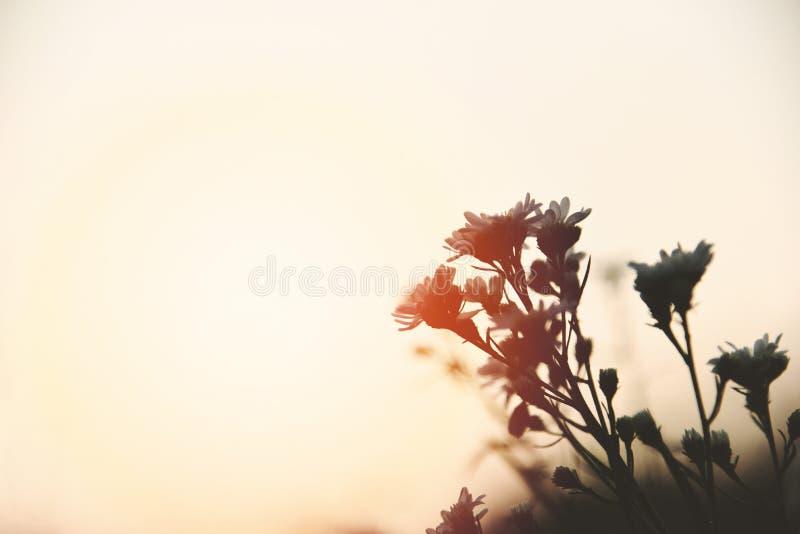 葡萄酒在日落或日出自然的花剪影 库存图片
