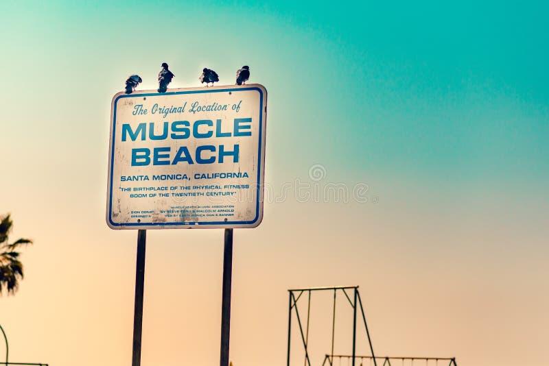 肌肉海滩签到LA 免版税库存图片