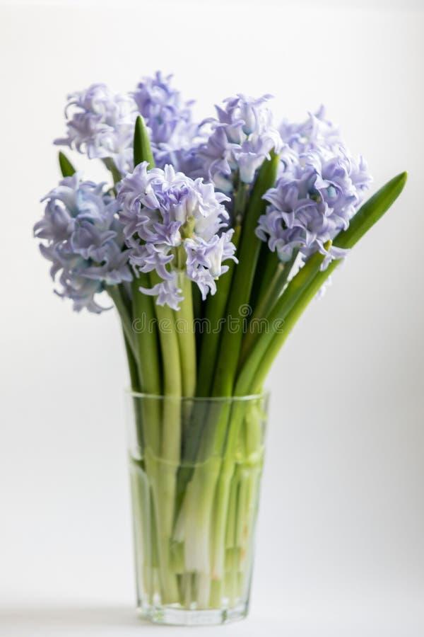蓝色春天花风信花立场小的花束在白色背景的在雕琢平面的杯而不是花瓶的水 免版税库存照片