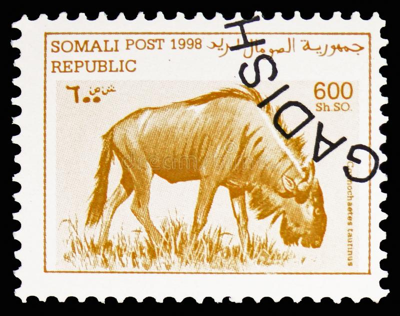 蓝色角马(角马属taurinus),索马里serie,大约1998年 免版税库存图片