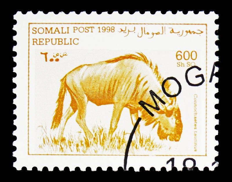 蓝色角马(角马属taurinus),索马里serie,大约1998年 库存图片