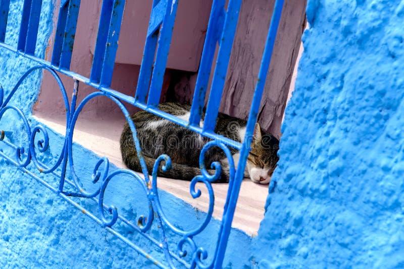 蓝色色的墙壁,拉巴特麦地那,Morocoo 免版税库存照片