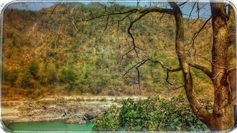 自然的秀丽 免版税图库摄影