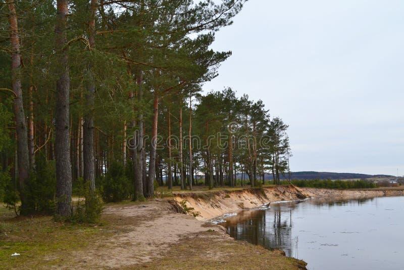 自然风景风景 森林和河全景在春天 免版税库存照片