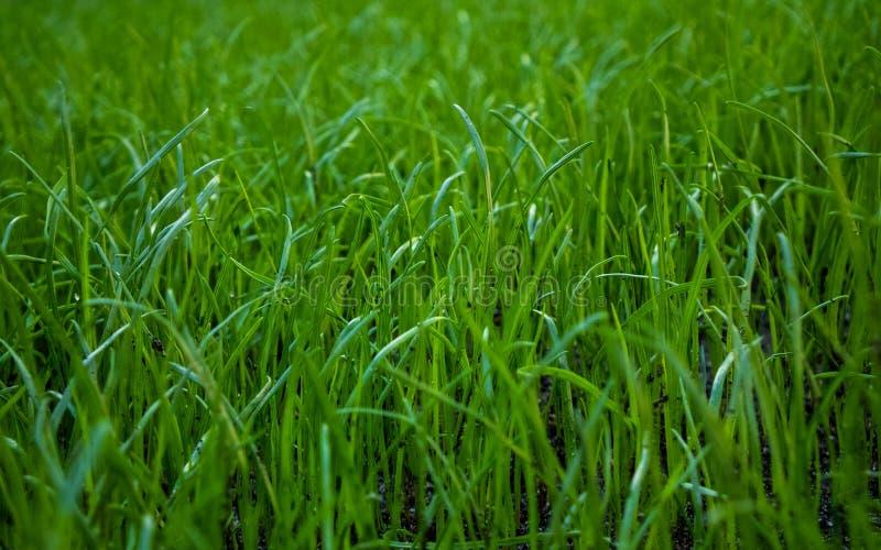 自然,植物群,庭院,草,草坪,地球 免版税库存图片
