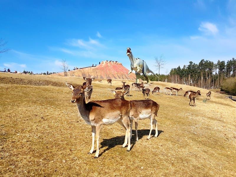 自由漫游的鹿在有火山的恐龙公园 免版税库存照片
