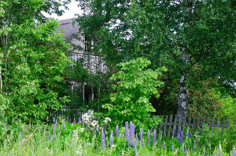 老被放弃的农舍在森林 图库摄影