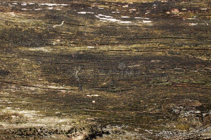 老自然木板纹理有镇压的作为背景 库存照片