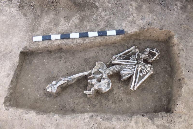 考古学塞浦路斯挖掘kato paphos公园 骨骼的人的遗骸骨头在地面的,与措施板条 真正的挖掘机的过程 库存图片