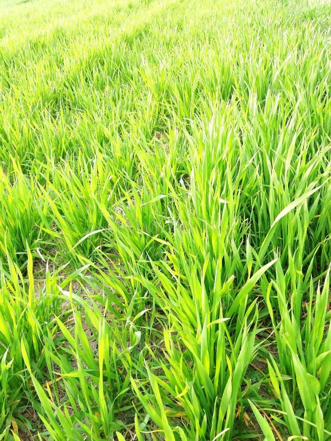 耕地和年轻绿色春天草在波动山岭地区 库存照片