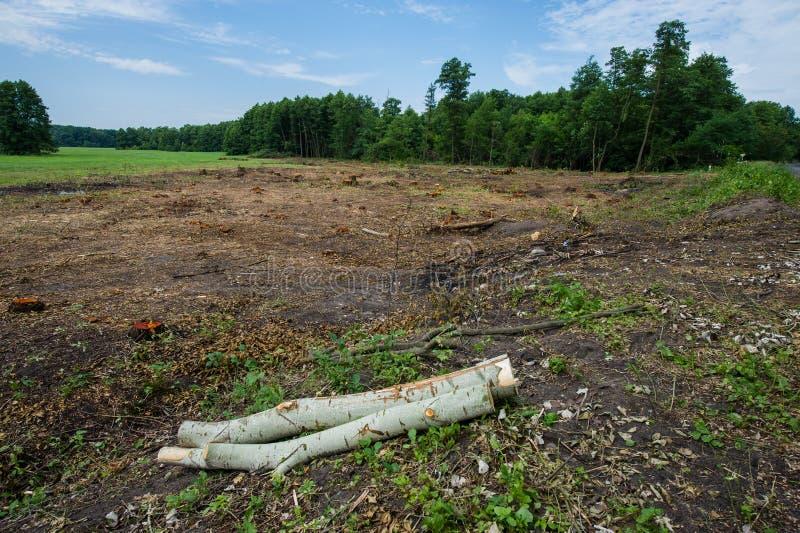È il disboscamento Sulla bugia del diagramma tronchi di albero abbandonati fotografia stock libera da diritti