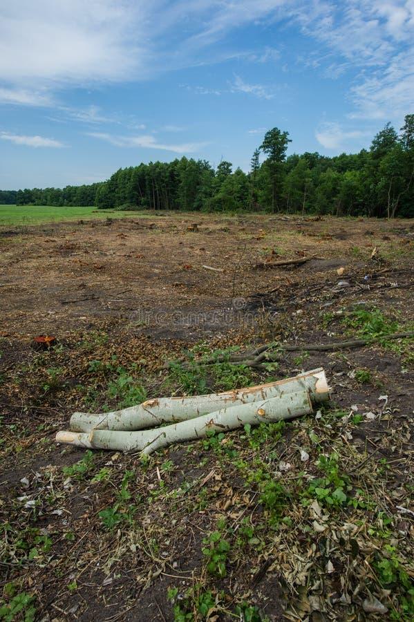 È il disboscamento Sulla bugia del diagramma tronchi di albero abbandonati immagini stock