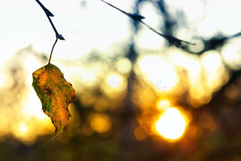È un poco calore dal sole di inverno fotografia stock libera da diritti