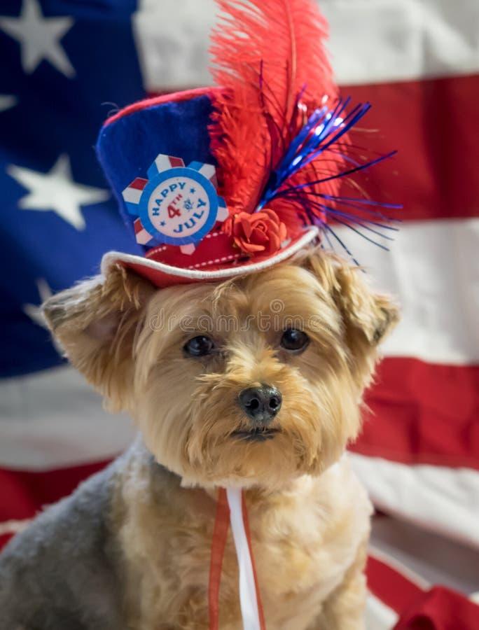 4ème patriotique du portrait de chien de juillet photographie stock