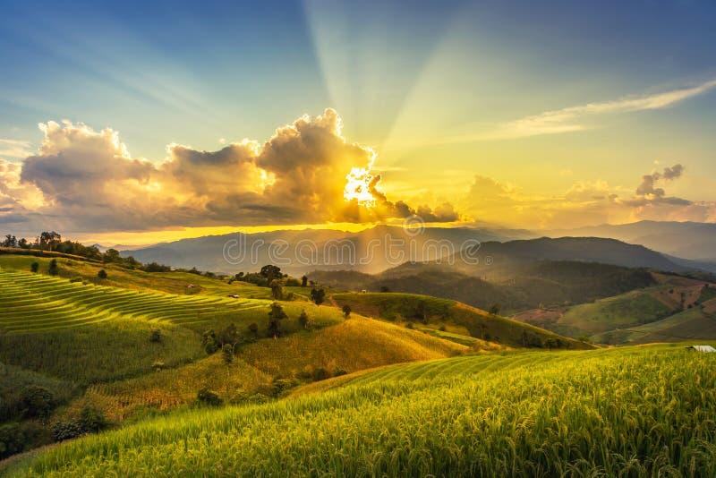 风景视图与太阳光芒的日落时间在Pa的绿色露台的种植园水稻领域发出当当声Pieng, 图库摄影